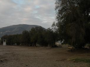 Αρμυρίκια στην παραλία τής Π. Φώκαιας