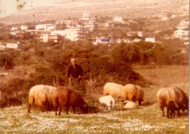 ΠΑΠΠΟΥΣ 1980_n